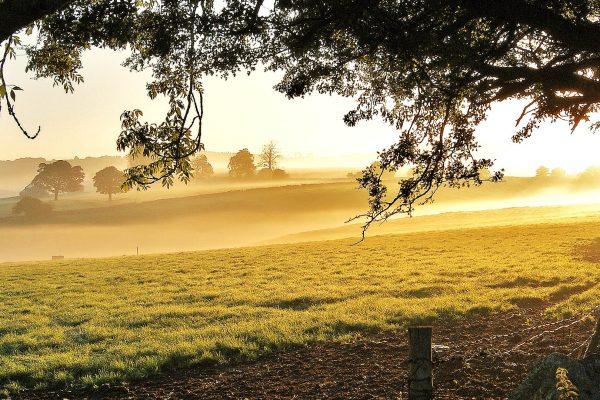 Bakewell Daybreak
